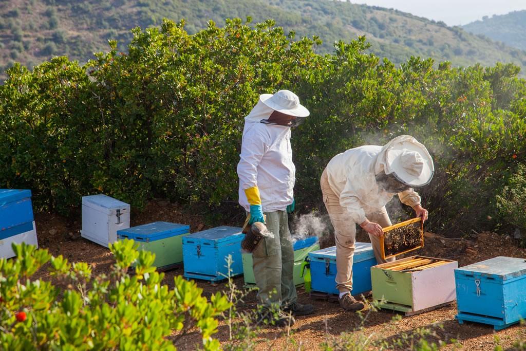 μελισσοκόμους