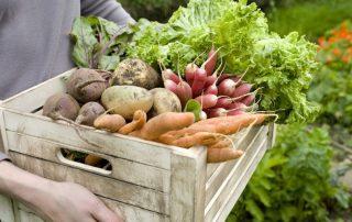 Βιολογικά προϊόντα αγρότες