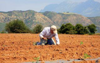 Αγρότης ρύθμισης αιτήσεις ασφάλιση προαιρετική σχέδια Μηχανογραφικό Παράταση