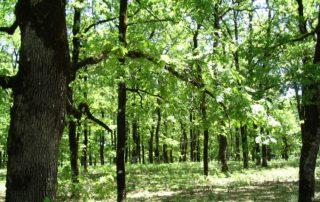 Περιβάλλοντος Δάσωσης παραγωγοί