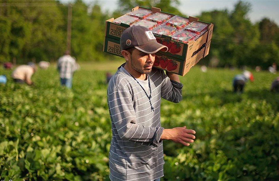 αναδιανομή ευάλωτα αγροτικά προϊόντα Ενιαία Ενίσχυση ευάλωτα αγροτικά προϊόντα