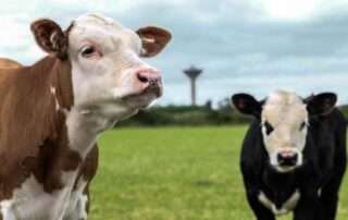 καλλιέργεια βιολογικών ζωοτροφών